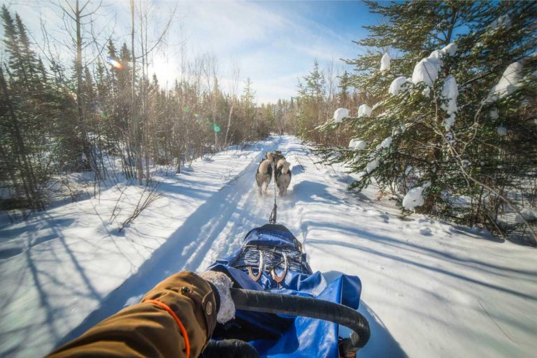 chien-de-traineau-moto-neige-quebec-canada-lac-st-jean