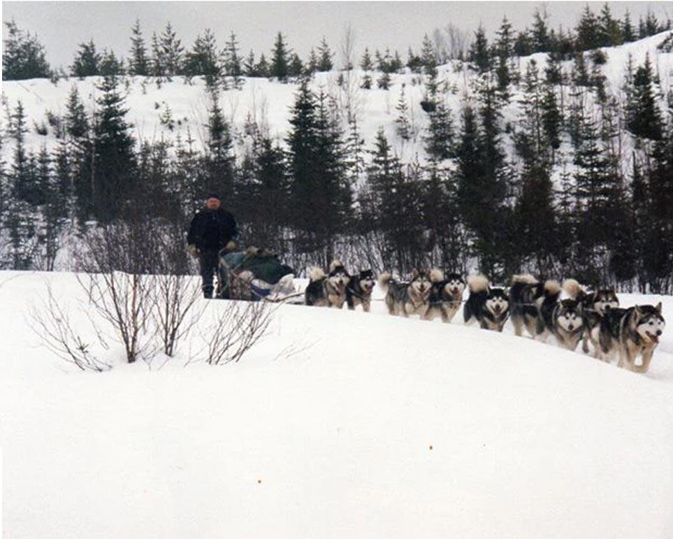 traineau malamute