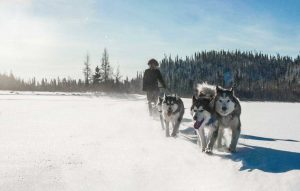 traineau chiens malamute sled background